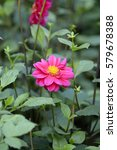 Small photo of Beautiful garish Flower in spring, Beautiful Flower in natural background, soft focus; Blur; Close-up.