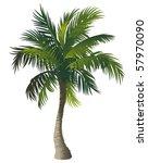 vector illustration of the palm ... | Shutterstock .eps vector #57970090