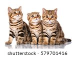 Stock photo three young cheerful scottish kitten sitting isolated on white background 579701416