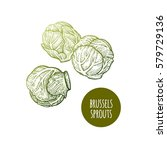 brussels sprouts. hand drawing... | Shutterstock .eps vector #579729136