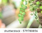nature and garden | Shutterstock . vector #579780856