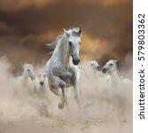 beautiful andalusian stallion... | Shutterstock . vector #579803362
