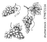 set of grapes monochrome sketch.... | Shutterstock .eps vector #579872116