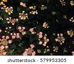 flower | Shutterstock . vector #579953305