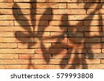 shadow of the leaf reflection... | Shutterstock . vector #579993808
