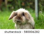 Cute Bunny With Floppy Ears...