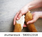 Stock photo dog paws and human hand close up top view conceptual image of friendship trust love the help 580012318
