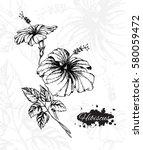 hibiscus flowers. botanical... | Shutterstock .eps vector #580059472