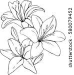 vector illustration of lily in... | Shutterstock .eps vector #580079452