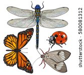 set of insects like dragonfly ... | Shutterstock .eps vector #580081312