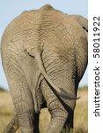 African Elephant Behind