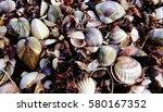 blank clamshell cerastoderma on ... | Shutterstock . vector #580167352