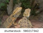 two lizards in the zoo | Shutterstock . vector #580217362