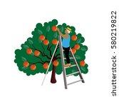 farmer gathering apple harvest. ...   Shutterstock .eps vector #580219822