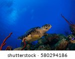 A Happy Hawksbill Turtle At...