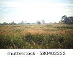 pennisetum pedicellarum weed... | Shutterstock . vector #580402222