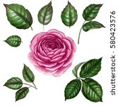 Stock photo pink rose watercolor rose watercolor flower with leaves botanical illustration hand drawn 580423576