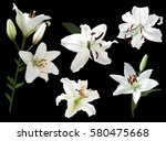 illustration with lily flowers... | Shutterstock .eps vector #580475668