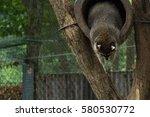 raccoon on the tree | Shutterstock . vector #580530772