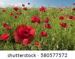 brightly coloured poppies and... | Shutterstock . vector #580577572