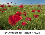 brightly coloured poppies and... | Shutterstock . vector #580577626