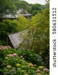 Small photo of Hydrangea in Kamakura, Japan