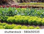 Vegetable Garden Color Green...