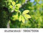 leaves of fresh green. leaves... | Shutterstock . vector #580675006