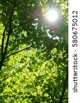leaves of fresh green. leaves... | Shutterstock . vector #580675012