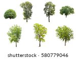 Collection Of Trees Isolated O...
