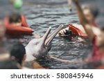 people feeding the famous pink... | Shutterstock . vector #580845946