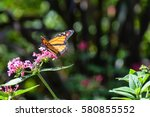 monarch butterfly   nymphalidae ... | Shutterstock . vector #580855552