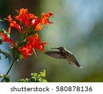 hummingbird | Shutterstock . vector #580878136
