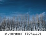 forest and clear blue sky | Shutterstock . vector #580911106