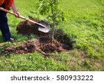 Stock photo man plants a tree hands with shovel digs the ground nature environment and ecology concept 580933222