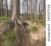 forest root | Shutterstock . vector #581027518