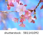 Romantic Cherry Blossoms In...