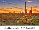 Saguaros At Sunset In Sonoran...