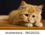 cat pet kitty | Shutterstock . vector #58120231