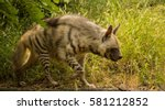 a striped hyena walking in... | Shutterstock . vector #581212852
