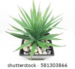 agave isolated on white... | Shutterstock . vector #581303866