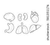 vector internal human organs...   Shutterstock .eps vector #581351176