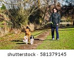 Stock photo woman walking three dogs in a park on a sunny day 581379145