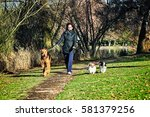 Stock photo woman walking three dogs in a park on a sunny day 581379256