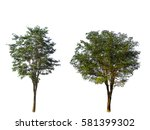 Collection Of Natural Trees...