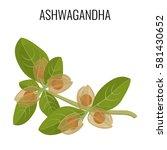 ashwagandha ayurvedic herb... | Shutterstock .eps vector #581430652