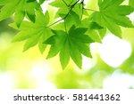 leaves of fresh green. leaves... | Shutterstock . vector #581441362