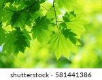 leaves of fresh green. leaves... | Shutterstock . vector #581441386