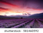 gorgeous lavender rows by the... | Shutterstock . vector #581460592