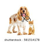 Stock photo dog and cat veterinarian and a stethoscope and glasses 581514178
